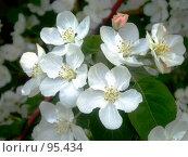 Весенний цвет. Стоковое фото, фотограф Абарникова Ирина / Фотобанк Лори