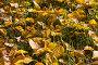 Ковер из осенний листвы  Leaves in a grass close-up, фото № 95730, снято 25 сентября 2007 г. (c) Argument / Фотобанк Лори