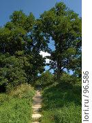 Купить «Старая лестница в парке», фото № 96586, снято 17 августа 2007 г. (c) Герман Молодцов / Фотобанк Лори