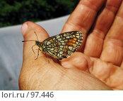 Купить «Бабочка на руке», фото № 97446, снято 15 июля 2018 г. (c) Вадим Кондратенков / Фотобанк Лори