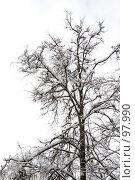 Купить «Дерево зимой», фото № 97990, снято 17 февраля 2007 г. (c) Юрий Синицын / Фотобанк Лори