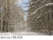 Купить «Просека в зимнем лесу», фото № 98034, снято 17 февраля 2007 г. (c) Юрий Синицын / Фотобанк Лори