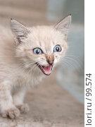 Купить «Взгляд маленького серого котенка», фото № 99574, снято 13 сентября 2007 г. (c) Останина Екатерина / Фотобанк Лори