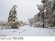 Купить «Зимняя живопись», фото № 99630, снято 16 октября 2007 г. (c) Alla Andersen / Фотобанк Лори