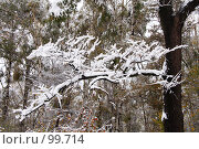 Купить «Снежная ветка», фото № 99714, снято 16 октября 2007 г. (c) Alla Andersen / Фотобанк Лори