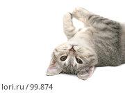 Купить «Взгляд маленького серого котенка», фото № 99874, снято 27 сентября 2007 г. (c) Останина Екатерина / Фотобанк Лори