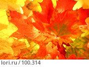 Купить «Фон из красных и желтых кленовых листьев», фото № 100314, снято 4 октября 2007 г. (c) Владимир Мельник / Фотобанк Лори