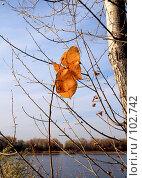 Купить «Последние листья...», фото № 102742, снято 22 апреля 2018 г. (c) Круглов Олег / Фотобанк Лори