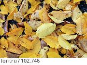 Купить «Фон из опавших осенних листьев», фото № 102746, снято 16 декабря 2017 г. (c) Круглов Олег / Фотобанк Лори