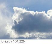 Купить «Пушистое облако Котенок», фото № 104226, снято 24 августа 2019 г. (c) Светлана Кучинская / Фотобанк Лори