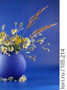 Букет полевых цветов на синем фоне, фото № 105214, снято 24 июня 2017 г. (c) Елена Блохина / Фотобанк Лори