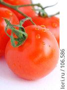 Купить «Помидоры», фото № 106586, снято 27 октября 2007 г. (c) Лифанцева Елена / Фотобанк Лори