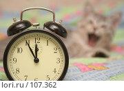 Купить «Будильник разбудил кошку», фото № 107362, снято 27 сентября 2007 г. (c) Останина Екатерина / Фотобанк Лори