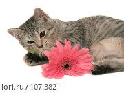 Купить «Серая кошка играет с  розовым цветком», фото № 107382, снято 16 октября 2007 г. (c) Останина Екатерина / Фотобанк Лори