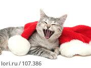 Купить «Серая кошка зевает рядом с новогодним колпаком», фото № 107386, снято 16 октября 2007 г. (c) Останина Екатерина / Фотобанк Лори