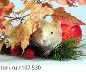 Купить «Любопытная крыса», фото № 107530, снято 23 сентября 2007 г. (c) Иван / Фотобанк Лори