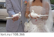 Купить «Свадебные голуби», фото № 108366, снято 25 августа 2007 г. (c) Ольга Шаран / Фотобанк Лори