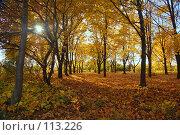 Купить «Закат в кленовой роще», фото № 113226, снято 20 октября 2007 г. (c) Арестов Андрей Павлович / Фотобанк Лори