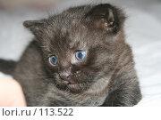 Купить «Маленький котёнок», фото № 113522, снято 7 ноября 2007 г. (c) Юлия Смольская / Фотобанк Лори