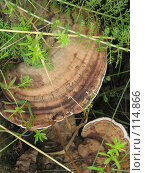 Купить «Грибы», фото № 114866, снято 30 июля 2007 г. (c) Алембатров Алексей / Фотобанк Лори