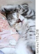 Купить «Милый серый котенок спит закрывшись лапой», фото № 115218, снято 5 июля 2007 г. (c) Останина Екатерина / Фотобанк Лори