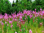 Розовая поляна, фото № 115598, снято 29 июля 2007 г. (c) Владимир Ильин / Фотобанк Лори