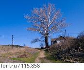 Купить «Старый серебристый тополь в Недвиговке вблизи древнего города Танаиса», фото № 115858, снято 22 февраля 2007 г. (c) Борис Панасюк / Фотобанк Лори