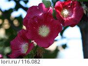 Купить «Красный цветок», фото № 116082, снято 11 августа 2007 г. (c) Т.Кожевникова / Фотобанк Лори