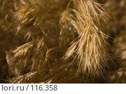 Купить «Трава», фото № 116358, снято 6 июня 2007 г. (c) Coler / Фотобанк Лори