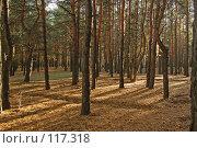 Купить «Закат в хвойном лесу», фото № 117318, снято 4 ноября 2007 г. (c) Арестов Андрей Павлович / Фотобанк Лори