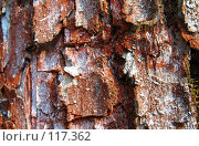 Купить «Кора дерева», фото № 117362, снято 8 октября 2006 г. (c) Арестов Андрей Павлович / Фотобанк Лори
