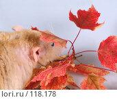 Купить «Дамбо рекс в засаде», фото № 118178, снято 23 сентября 2007 г. (c) Иван / Фотобанк Лори
