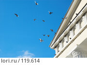 Купить «Летящие голуби», фото № 119614, снято 26 декабря 2006 г. (c) Сергей Старуш / Фотобанк Лори