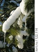 Снег на ветке. Стоковое фото, фотограф Геннадий / Фотобанк Лори