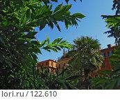 Купить «Зелень Средиземноморья», фото № 122610, снято 19 мая 2007 г. (c) Маргарита Лир / Фотобанк Лори