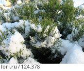 Купить «Снег и хвойные иголки», фото № 124378, снято 17 ноября 2007 г. (c) Алексей / Фотобанк Лори