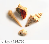 Купить «Ракушки», фото № 124750, снято 21 ноября 2007 г. (c) Екатерина Дындыкина / Фотобанк Лори