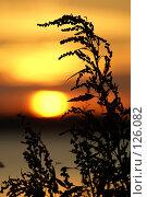 Купить «Закат», фото № 126082, снято 7 июля 2007 г. (c) Смирнова Лидия / Фотобанк Лори