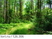 Купить «Брянский лес. Заброшенная дорога в полузабытое лето детства», фото № 126306, снято 9 июня 2007 г. (c) Виктор Пелих / Фотобанк Лори