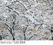 Купить «Текстура из заснеженных веток деревьев», фото № 126894, снято 16 ноября 2007 г. (c) Ольга Хорькова / Фотобанк Лори