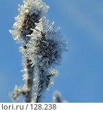Купить «Зимний цветок», фото № 128238, снято 30 декабря 2006 г. (c) Юрий Назаров / Фотобанк Лори