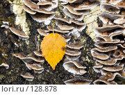 Купить «Осень в лесу», фото № 128878, снято 20 октября 2007 г. (c) Argument / Фотобанк Лори