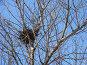 Птичье гнездо на дереве, фото № 130134, снято 26 марта 2005 г. (c) Serg Zastavkin / Фотобанк Лори