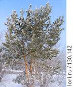 Купить «Деревья под снегом», фото № 130142, снято 25 марта 2005 г. (c) Serg Zastavkin / Фотобанк Лори