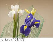 Купить «Ирисы», фото № 131178, снято 22 февраля 2007 г. (c) Александр Лебедев / Фотобанк Лори