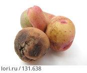 Купить «Картошка со шрамом», фото № 131638, снято 8 июля 2007 г. (c) Иван / Фотобанк Лори