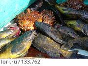 Купить «Морская рыба и крабы», фото № 133762, снято 27 июня 2006 г. (c) Николаенко Алексей / Фотобанк Лори