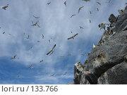Купить «Убежище чаек», фото № 133766, снято 27 июня 2006 г. (c) Николаенко Алексей / Фотобанк Лори