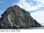 Чайки кружат над  скалой в море. Стоковое фото, фотограф Николаенко Алексей / Фотобанк Лори