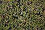 Растительный фон. Empetrum nigrum, фото № 134638, снято 12 августа 2006 г. (c) Serg Zastavkin / Фотобанк Лори